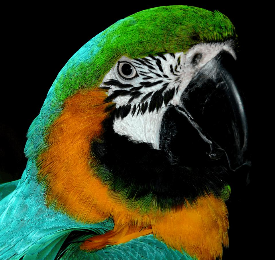 Parrot-17.png