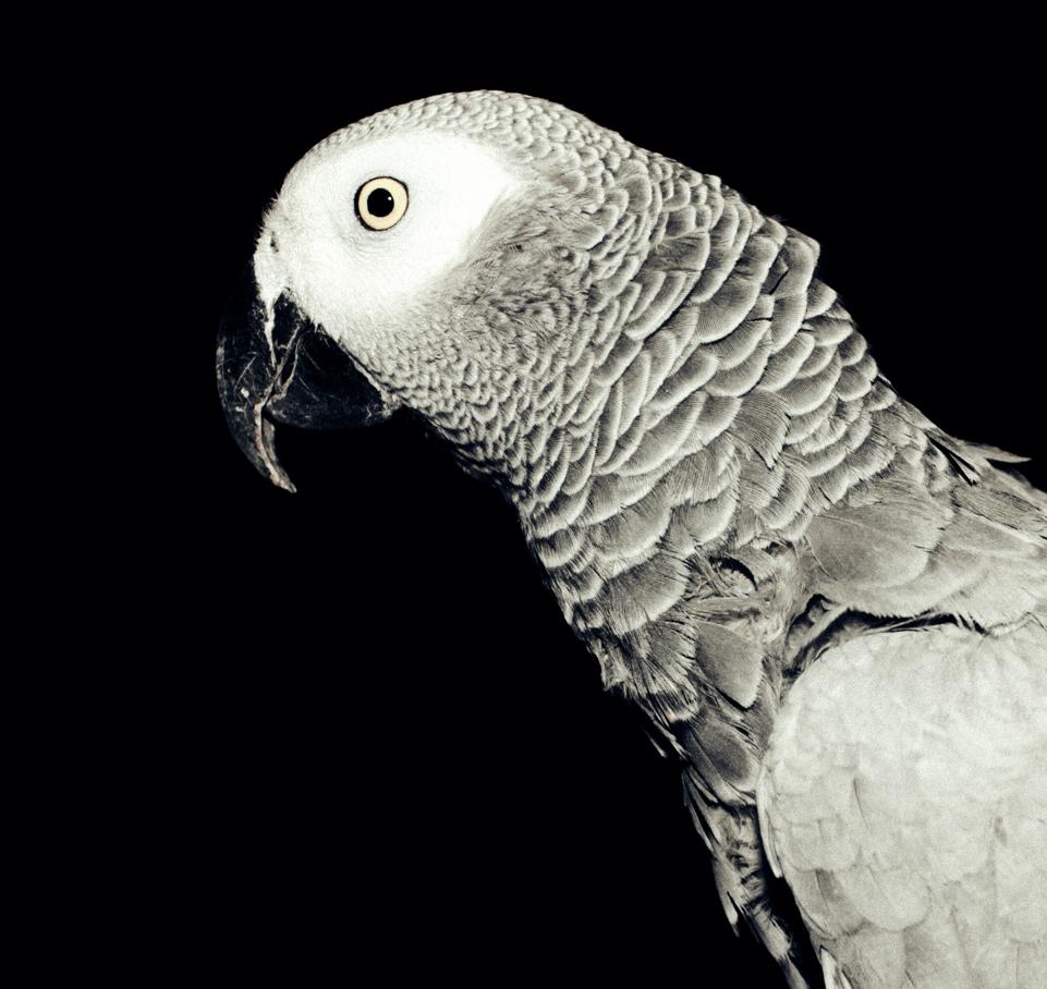 Parrot-18.png